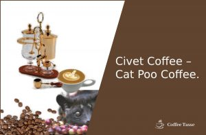Civet Coffee – Cat Poo Coffee